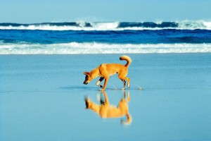 Four by Four hire Fraser Island